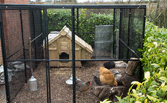 Andy's chicken palace and unobtrusive chicken fencing